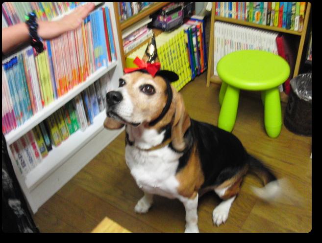 保護犬から教室のアイドルになったゴードン